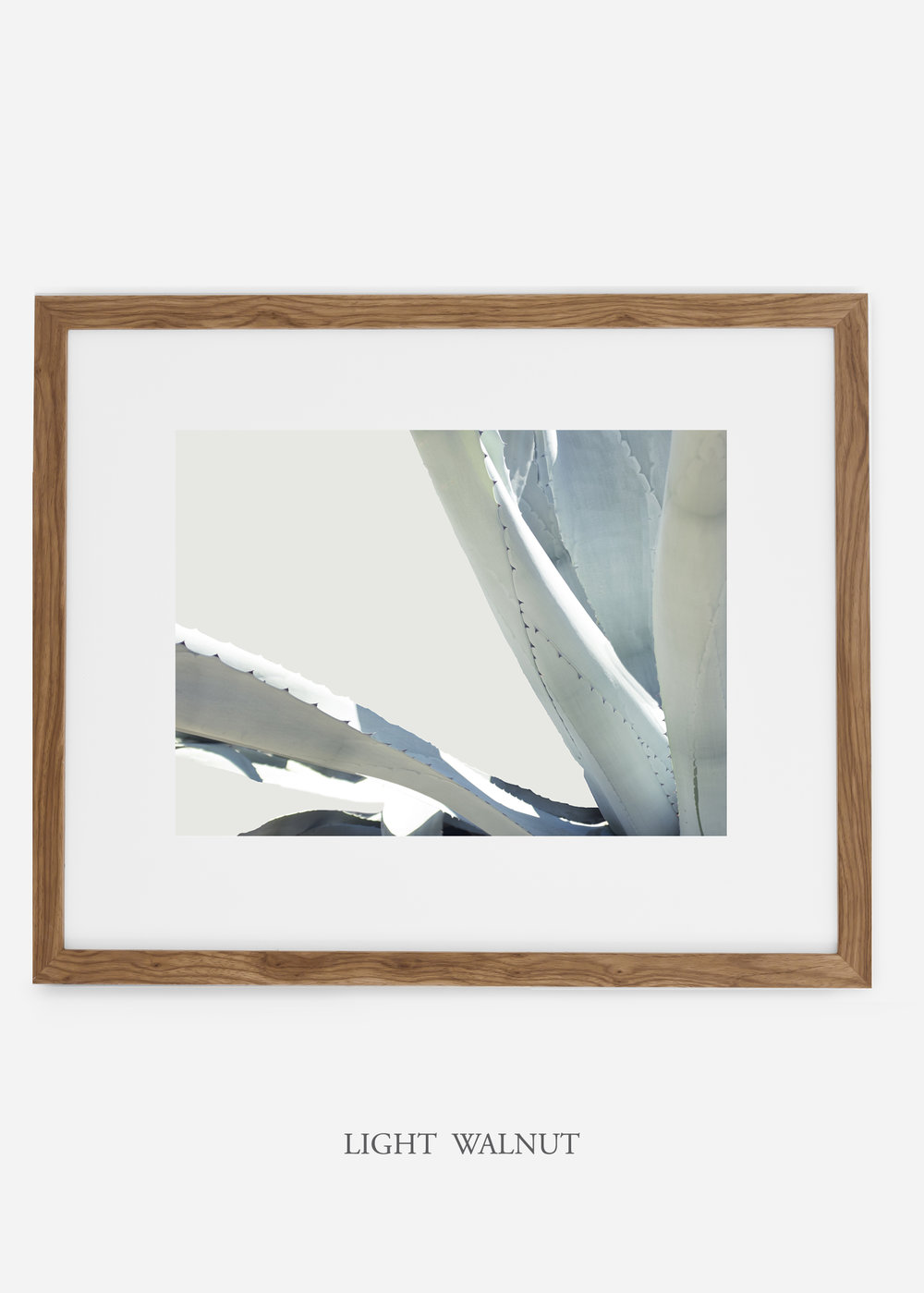 WilderCalifornia_lightwalnutframe_WinterWhite_No6_Art_Photography_interiordesign_agave.jpg