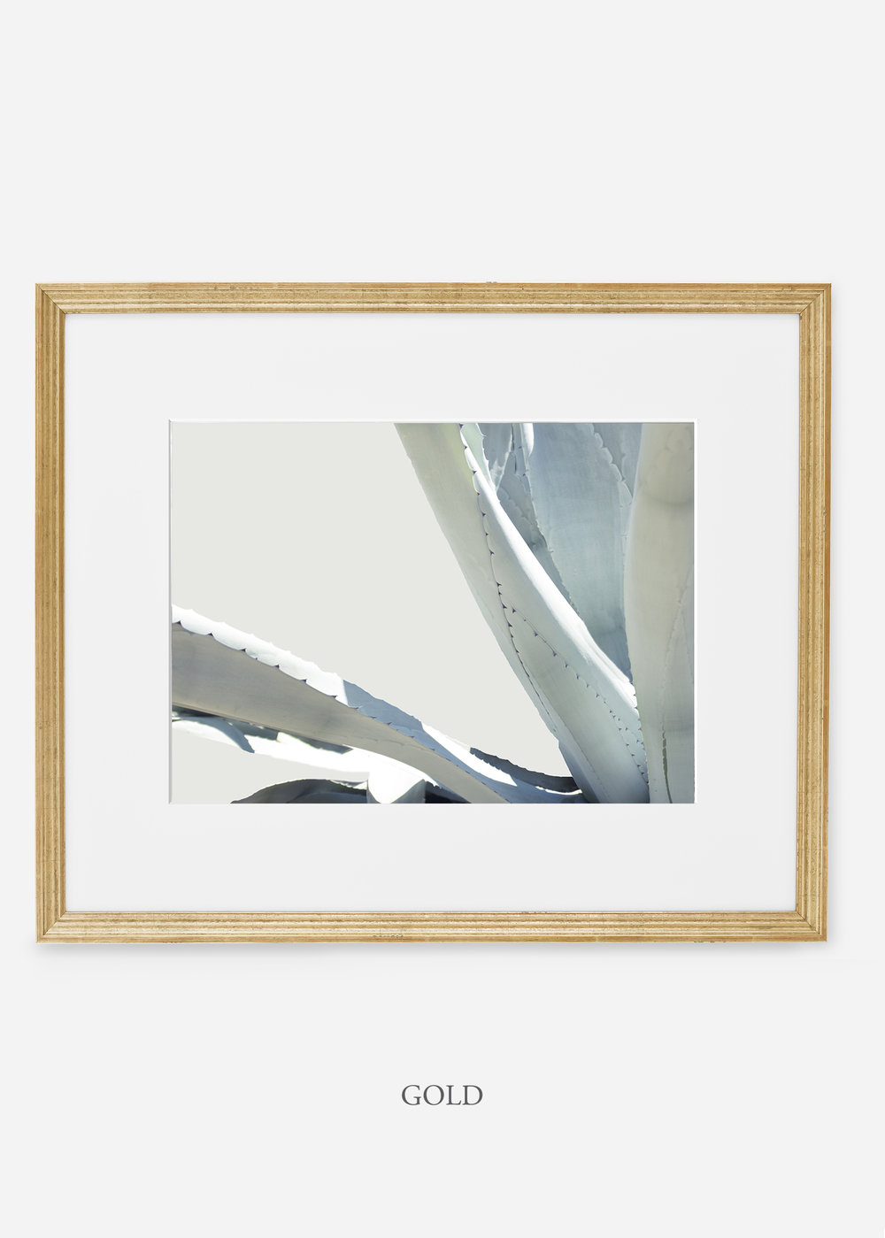 WilderCalifornia_goldframe_WinterWhite_No6_Art_Photography_interiordesign_agave.jpg