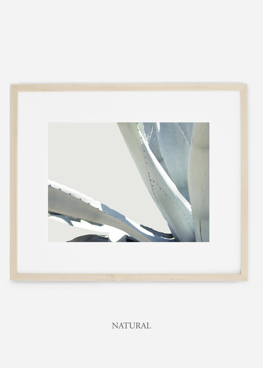 WilderCalifornia_naturalframe_WinterWhite_No6_Art_Photography_interiordesign_agave.jpg