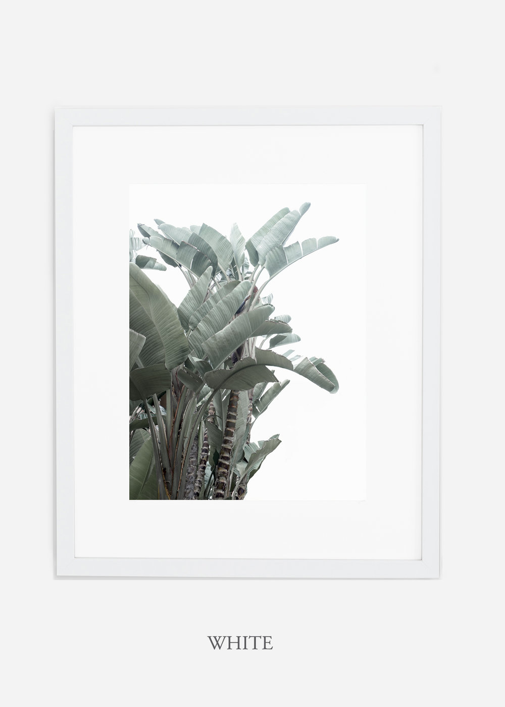 wildercalifornia_whiteframe_WinterWhite_BananaLeafNo.1_Tropical_LosAngeles_Art_HomeDecor_interiordesign_design.jpg