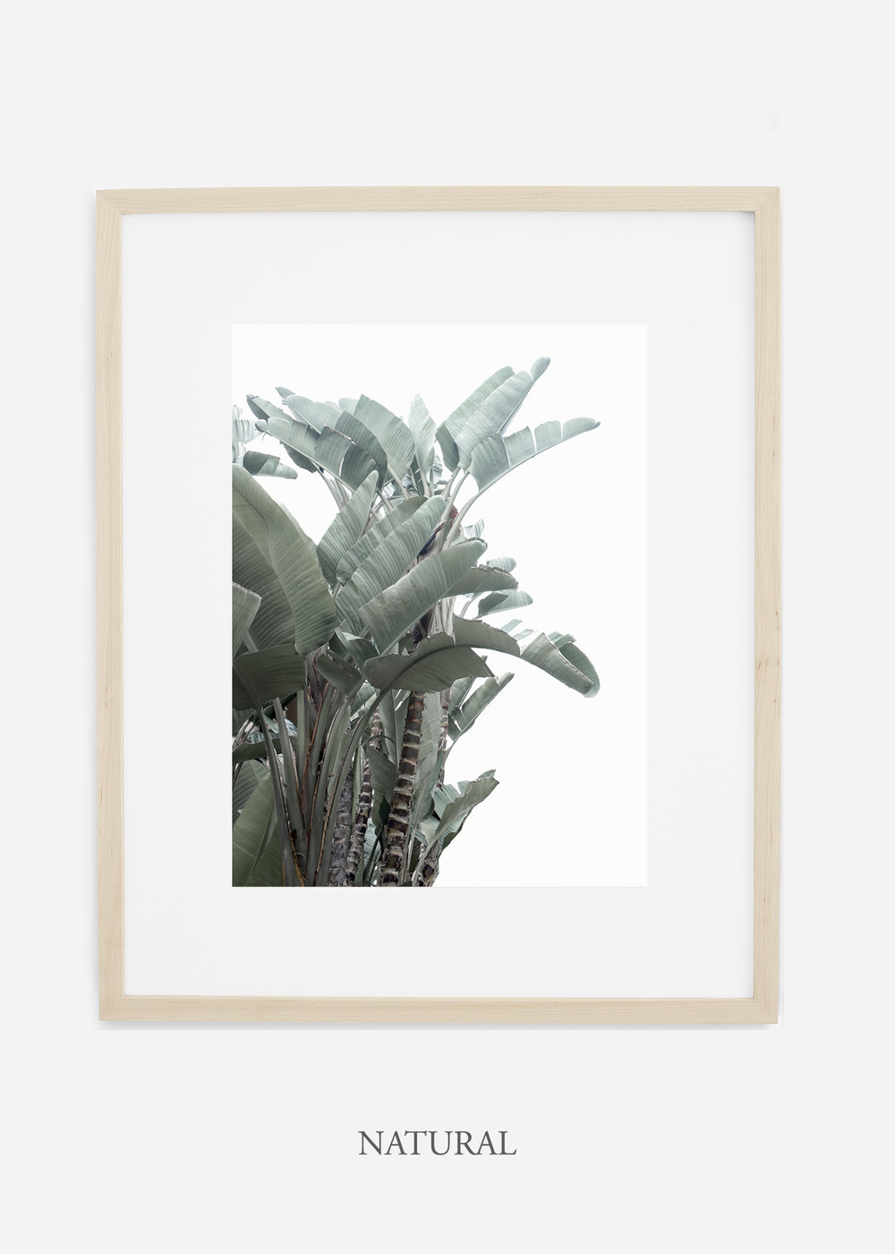 wildercalifornia_naturalframe_WinterWhite_BananaLeafNo.1_Tropical_LosAngeles_Art_HomeDecor_interiordesign_design.jpg