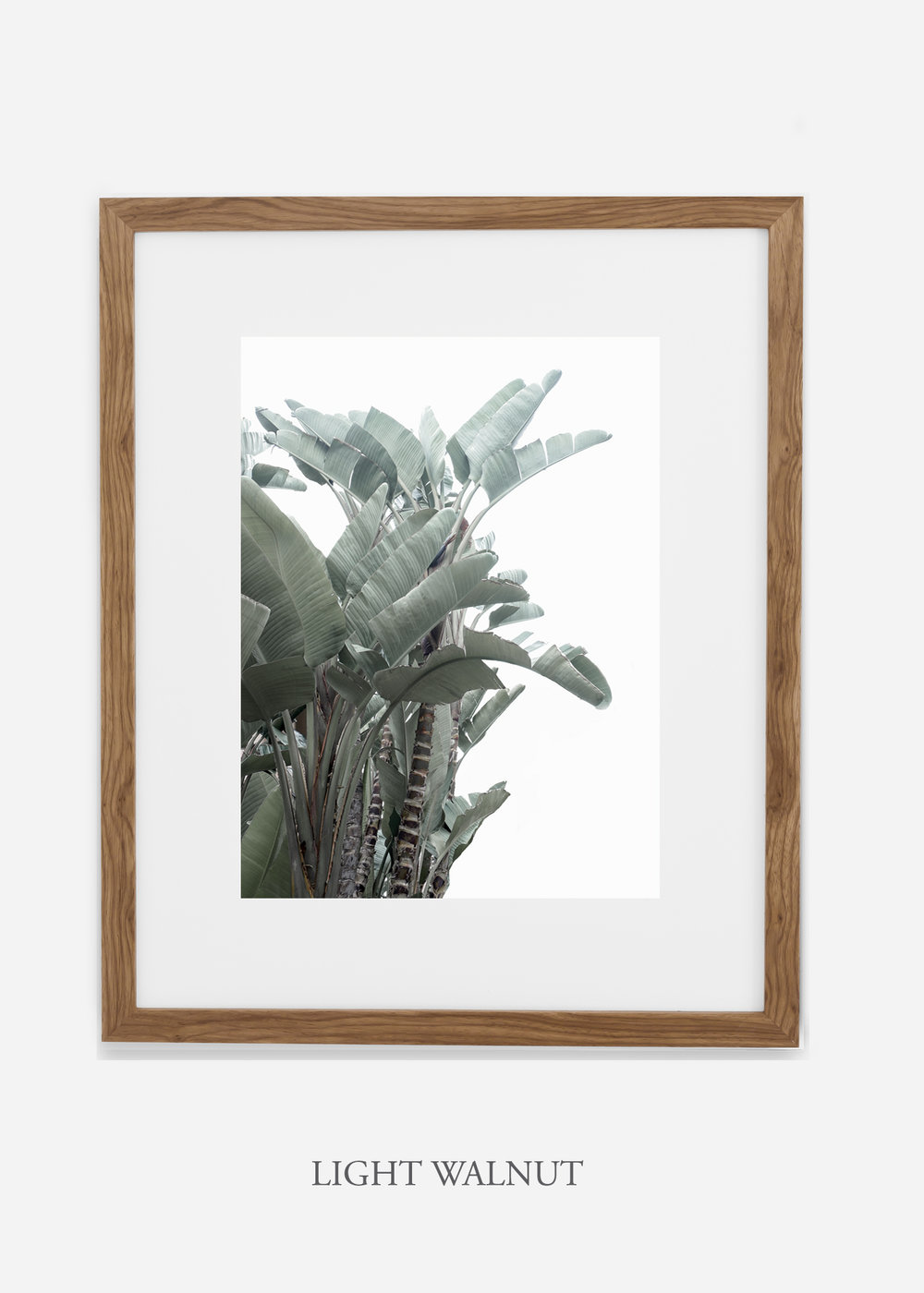 wildercalifornia_lightwalnutframe_WinterWhite_BananaLeafNo.1_Tropical_LosAngeles_Art_HomeDecor_interiordesign_design.jpg