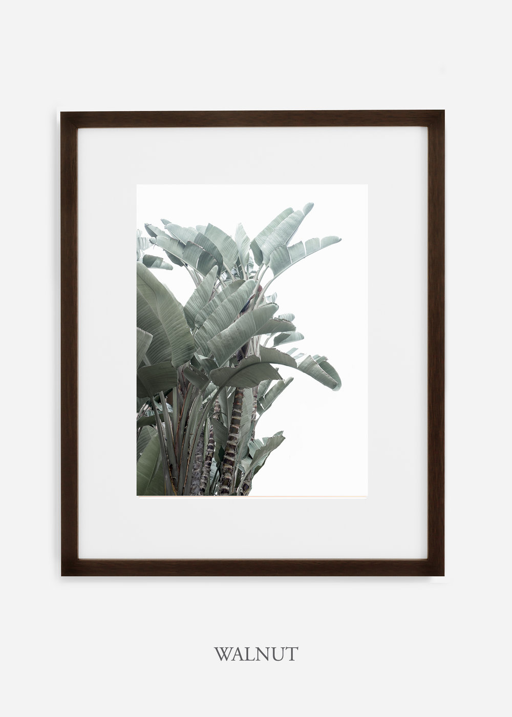 wildercalifornia_walnutframe_WinterWhite_BananaLeafNo.1_Tropical_LosAngeles_Art_HomeDecor_interiordesign_design.jpg