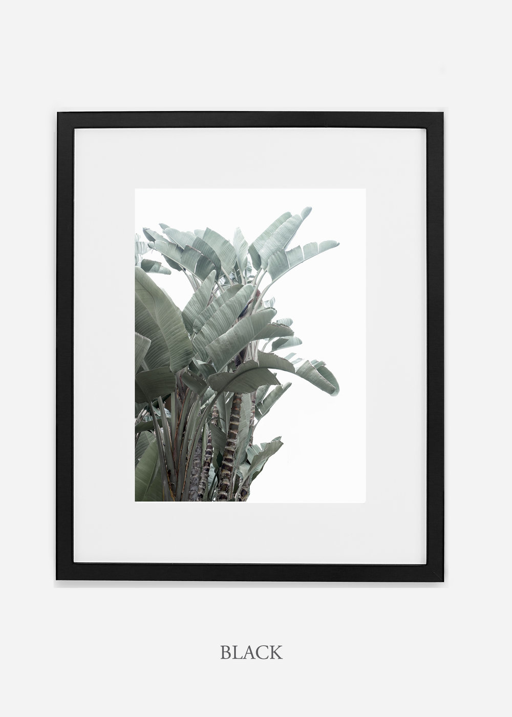 wildercalifornia_blackframe_WinterWhite_BananaLeafNo.1_Tropical_LosAngeles_Art_HomeDecor_interiordesign_design.jpg