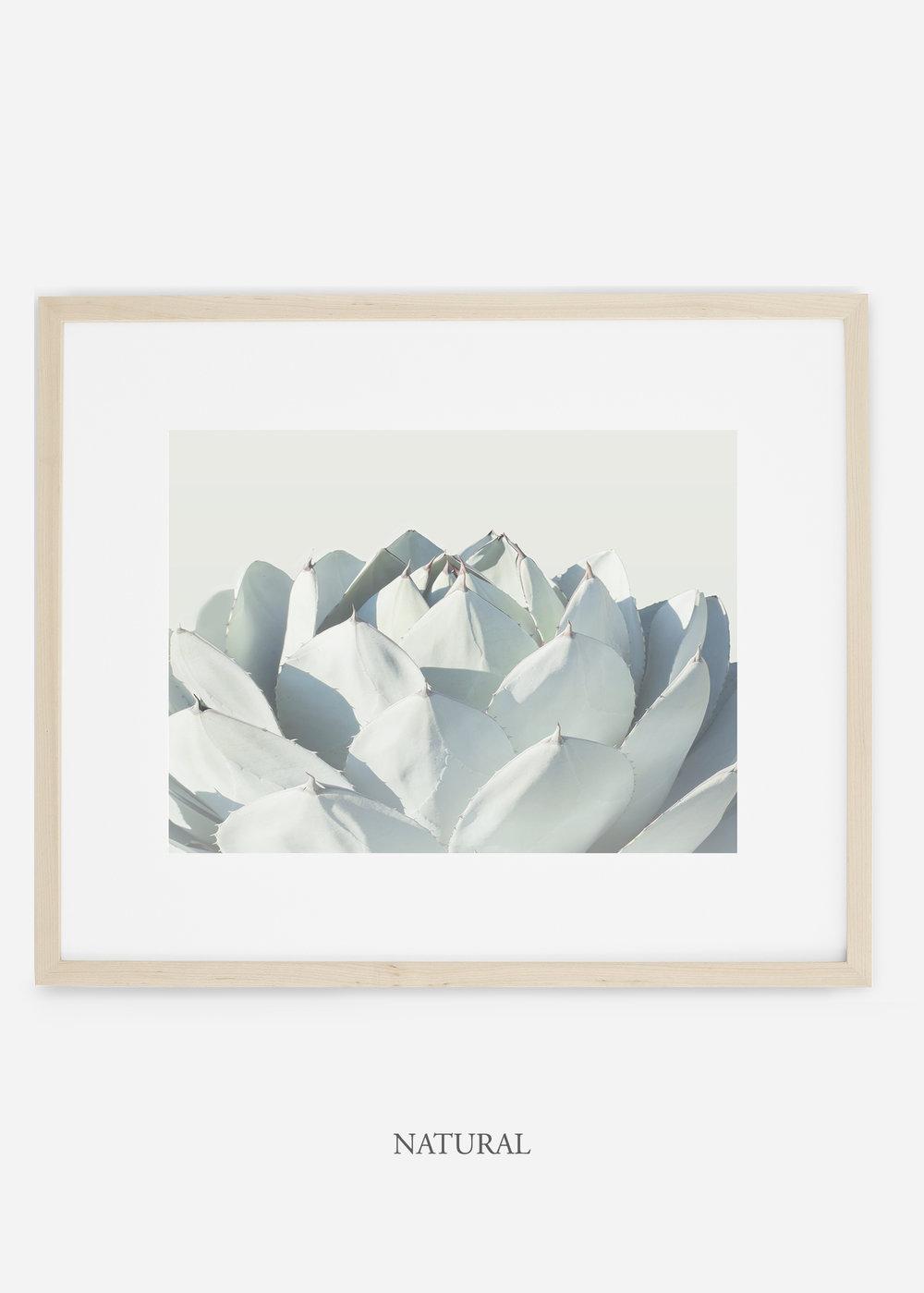 WilderCalifornia_naturalframe_Cactus_Art_Photography_interiordesign_white_bohemian_neutral_photography_photo.jpg