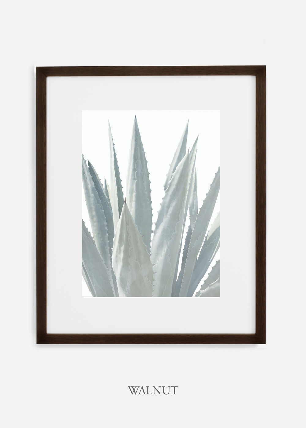 winterwhite_walnutframe_WinterWhiteAgaveNo.3_agave_prints_interiordesign_art_homedecor_bohemian_modern_minimal_photography_cactusphotography.jpg