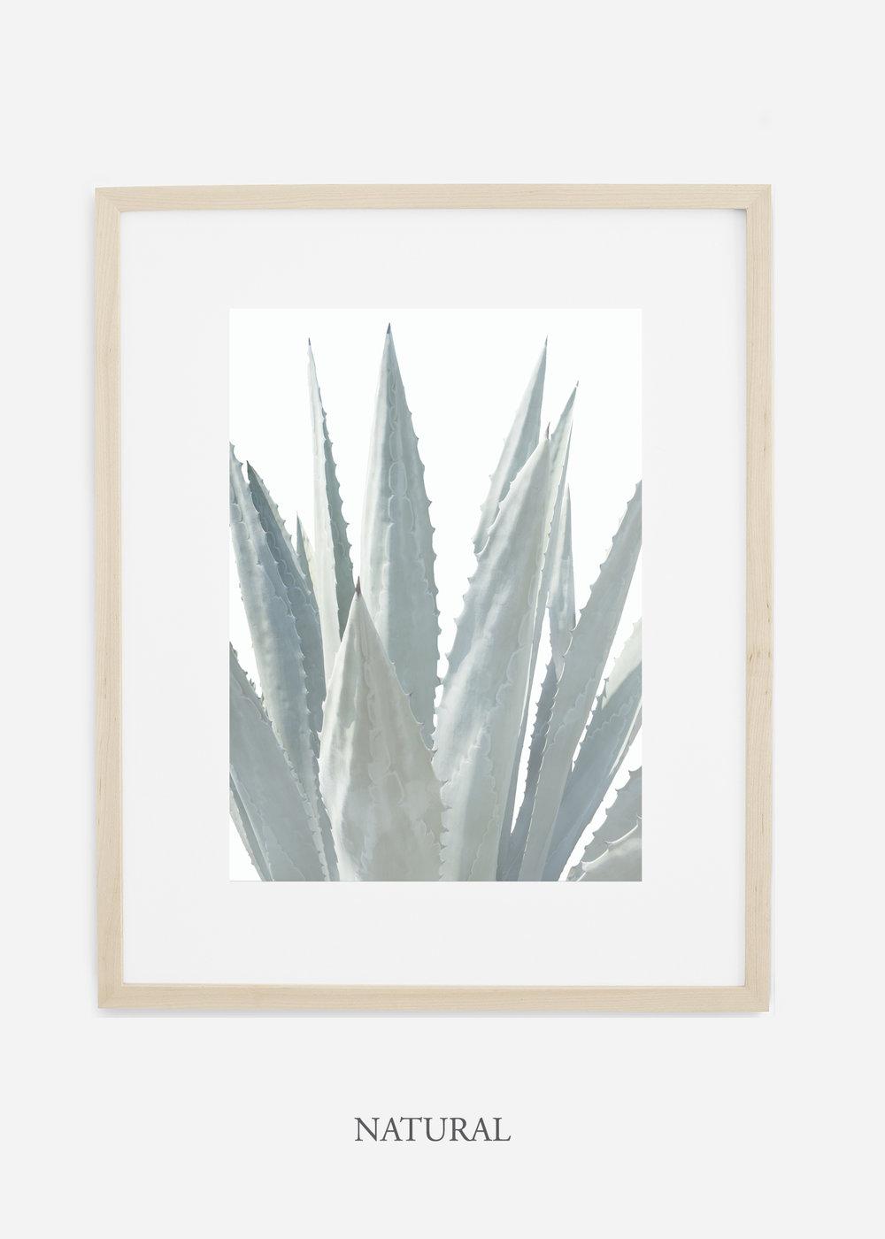 winterwhite_naturalframe_WinterWhiteAgaveNo.3_agave_prints_interiordesign_art_homedecor_bohemian_modern_minimal_photography_cactusphotography.jpg