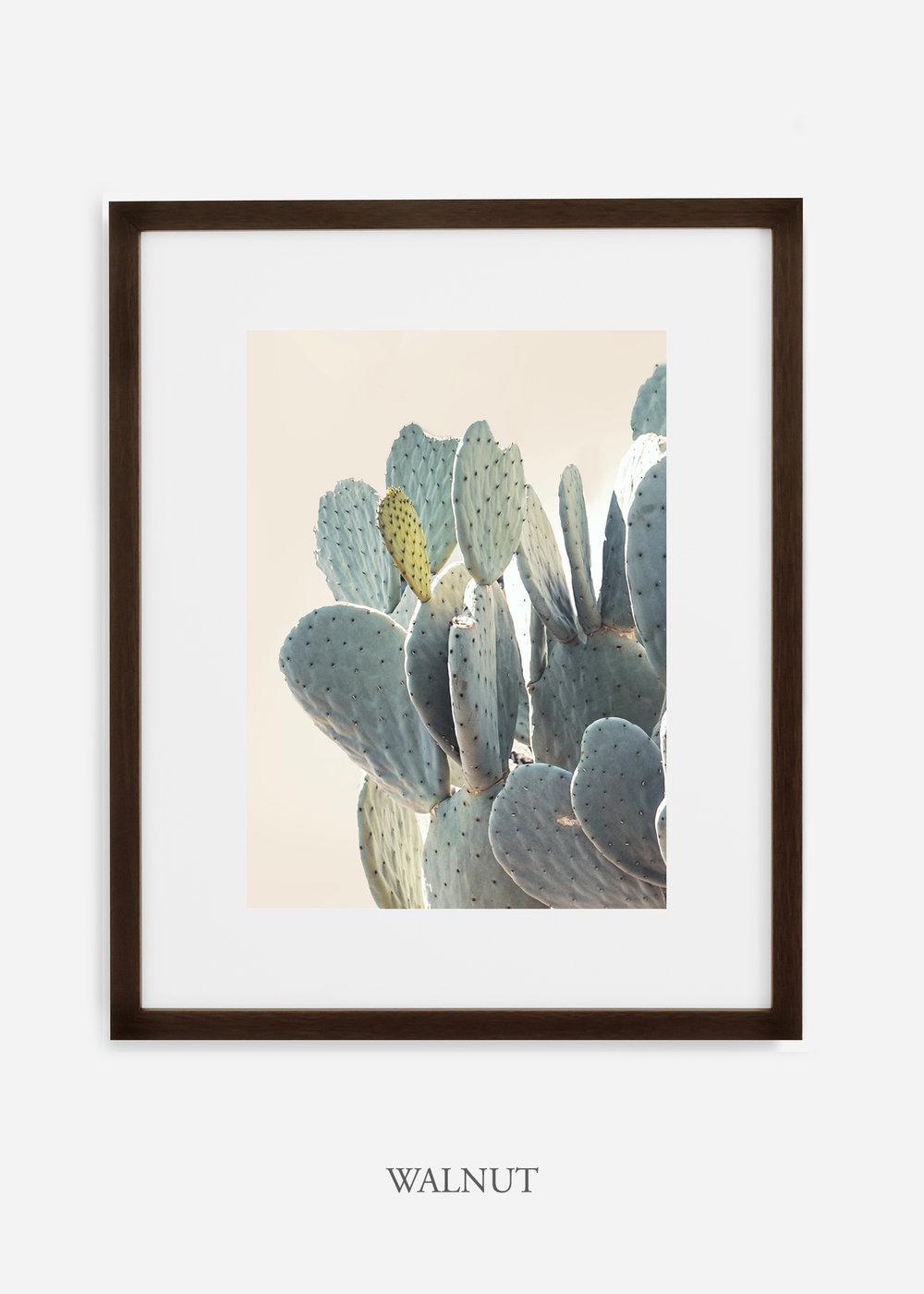 Desert_walnutframe_DesertDetails_Cactus__Art_Photography_interiordesign_bohemian_cactusart.jpg
