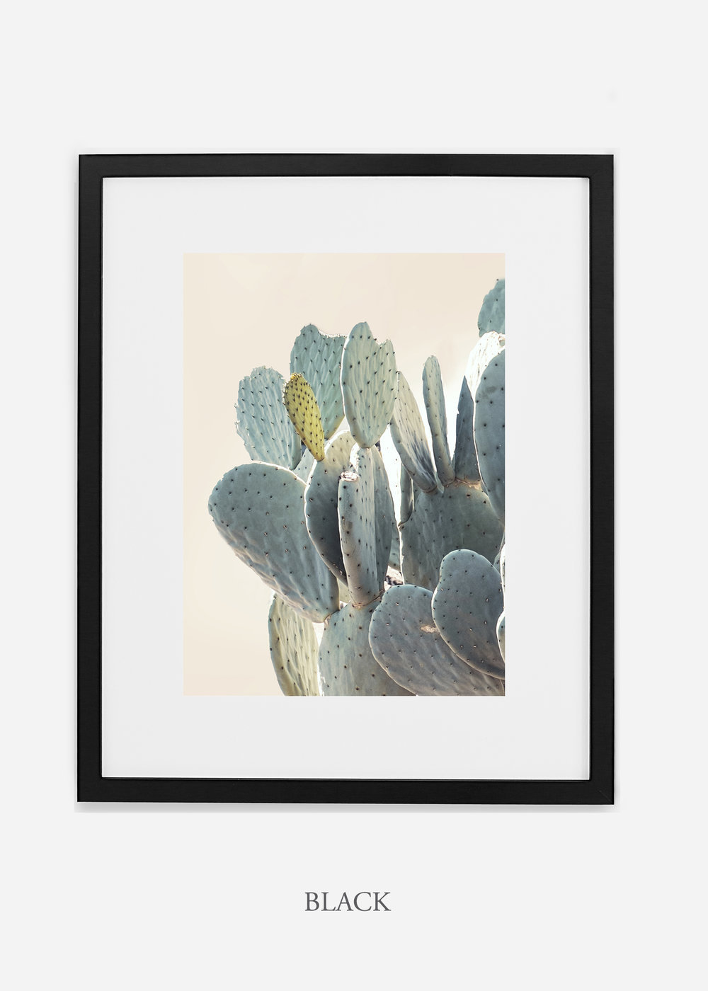 Desert_blackframe_DesertDetails_Cactus__Art_Photography_interiordesign_bohemian_cactusart.jpg