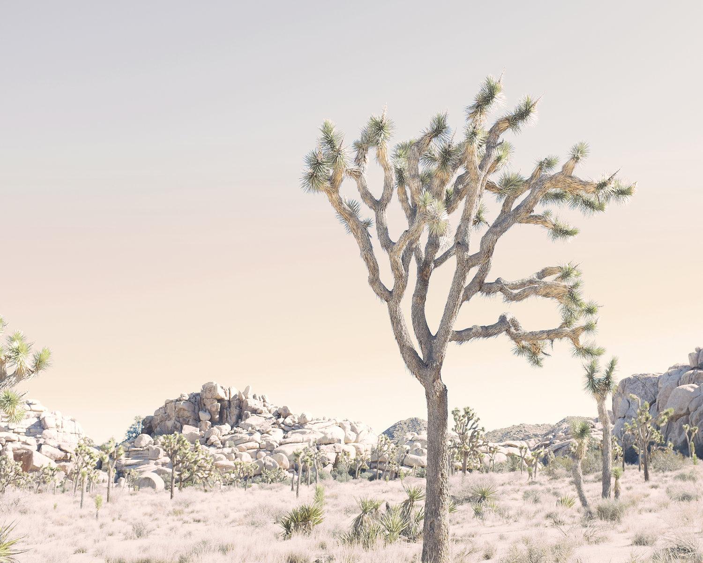Framing — WILDER CALIFORNIA