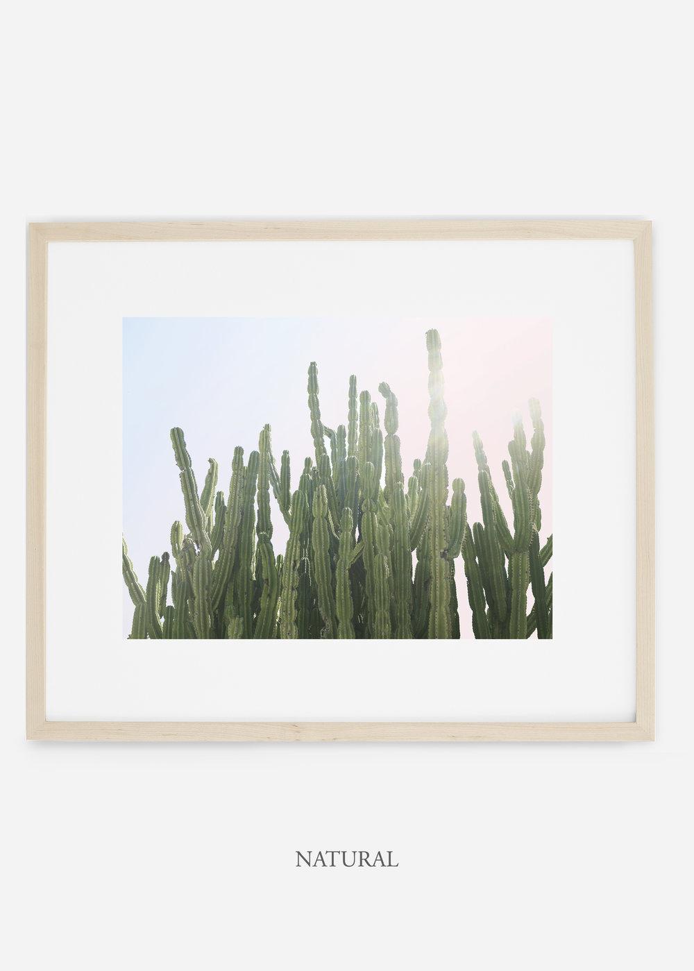 WilderCalifornia_natural_interiordesign_cactusprint_MajesticCactusNo.3.jpg