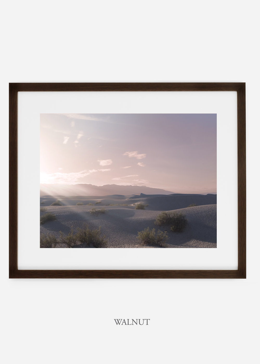 wildercalifornia_walnutframe_deathvalley_14_minimal_cactus_art_interiordesign_blackandwhite.jpg