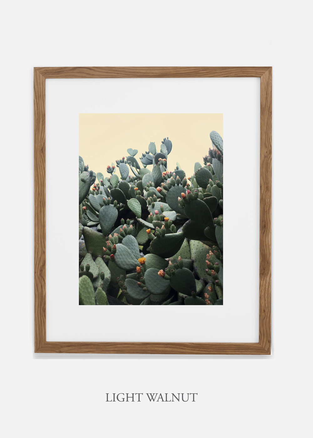 WilderCalifornia_lightwalnutframe_CactusBloom_No1_Art_Photography_interiordesign_agave.jpg