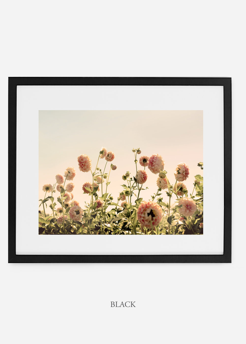 BlackFrame_DahliaNo.1_WilderCalifornia_Art_Floral_Homedecor_Prints_Dahlia_Botanical_Artwork_Interiordesign.jpg