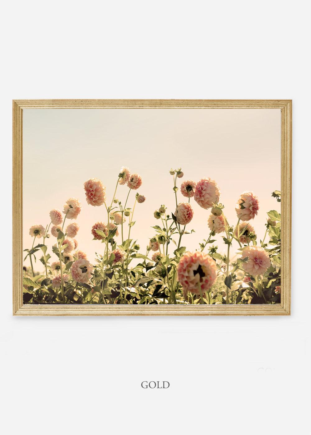 NoMat_GoldFrame_DahliaNo.1_WilderCalifornia_Art_Floral_Homedecor_Prints_Dahlia_Botanical_Artwork_Interiordesign.jpg