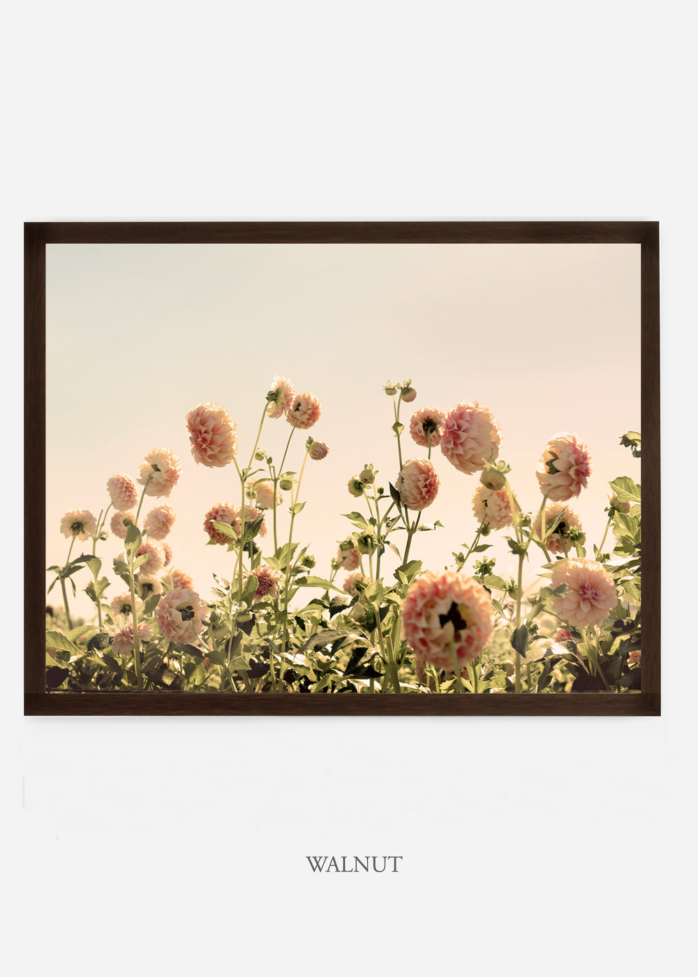 NoMat_WalnutFrame_DahliaNo.1_WilderCalifornia_Art_Floral_Homedecor_Prints_Dahlia_Botanical_Artwork_Interiordesign.jpg
