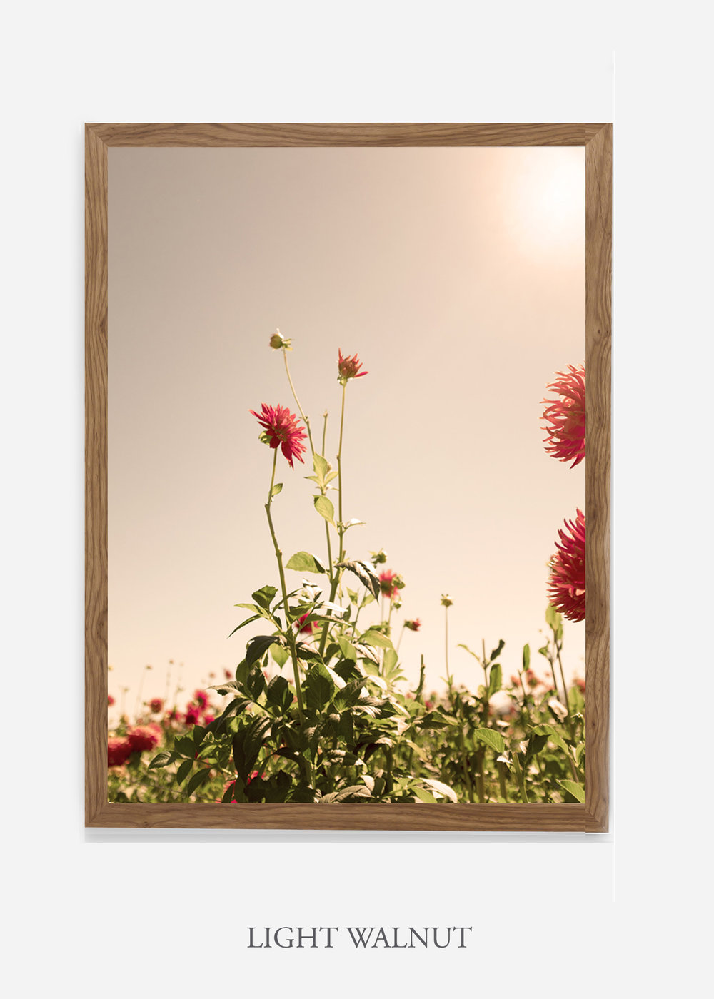 DahliaNo.2_lightwalnutframe__No.1_interiordesign_botanicalprint_art.jpg