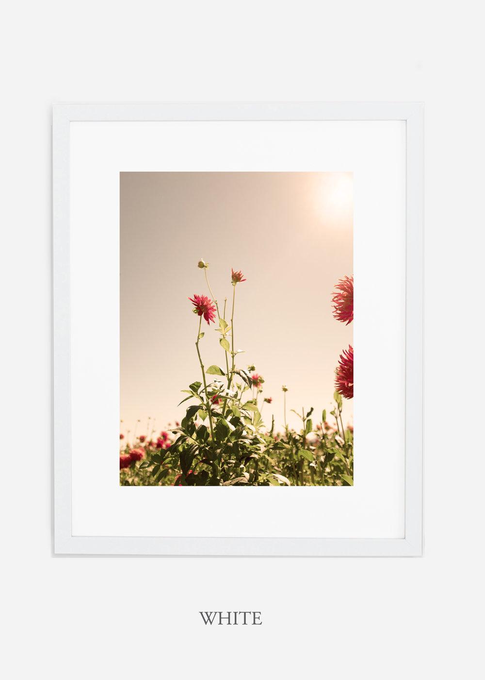 DahliaNo.2_whiteframe__mat_interiordesign_botanicalprint_art.jpg