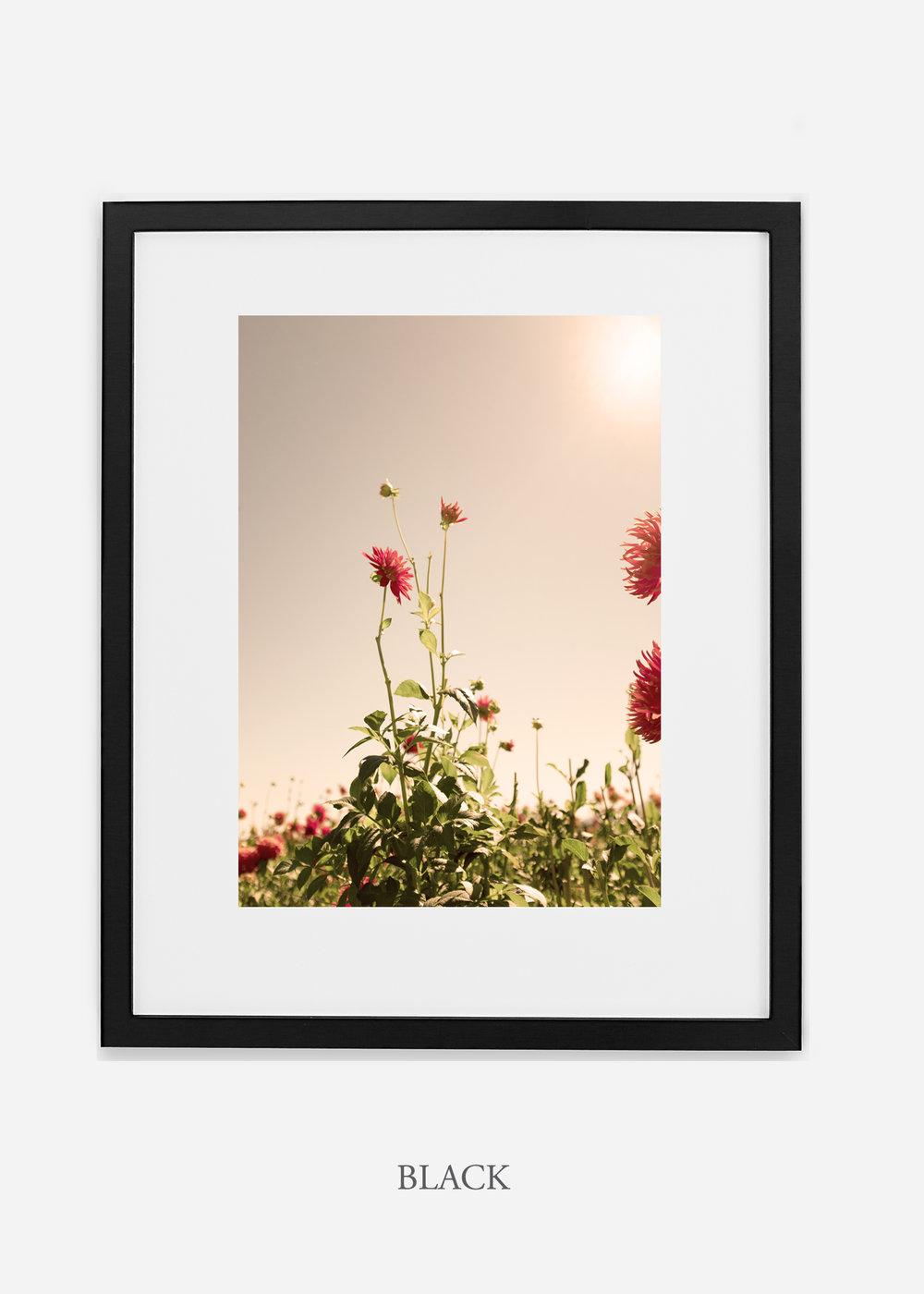 DahliaNo.2_blackframe__mat_interiordesign_botanicalprint_art.jpg
