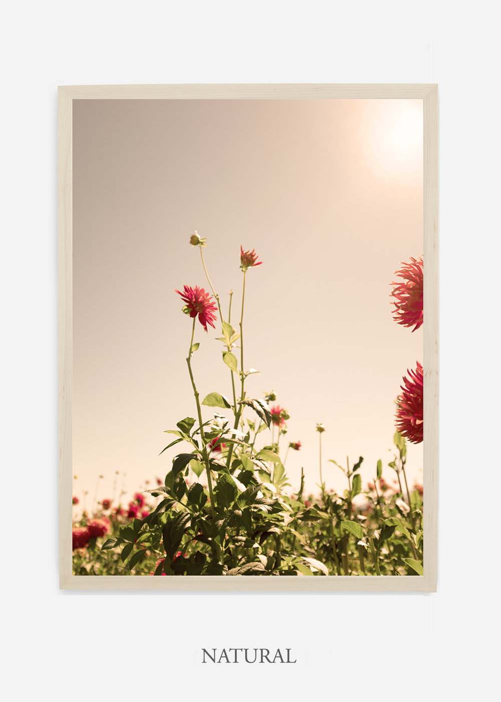 DahliaNo.2_naturalframe__NoMat_interiordesign_botanicalprint_art.jpg