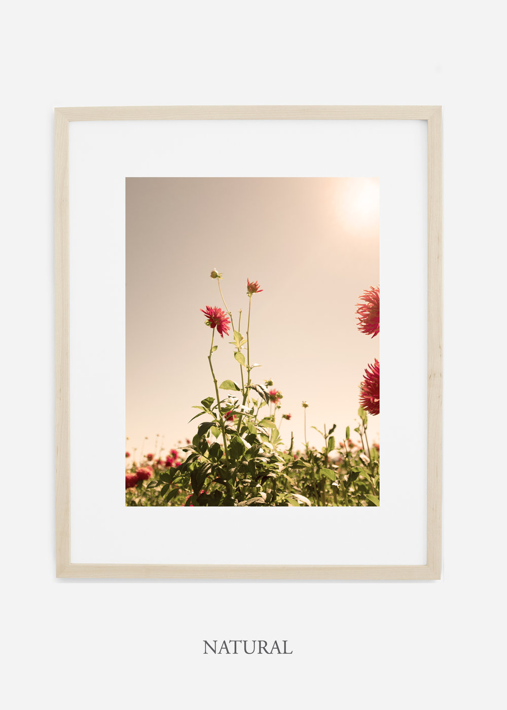 DahliaNo.2_naturalframe__mat_interiordesign_botanicalprint_art.jpg
