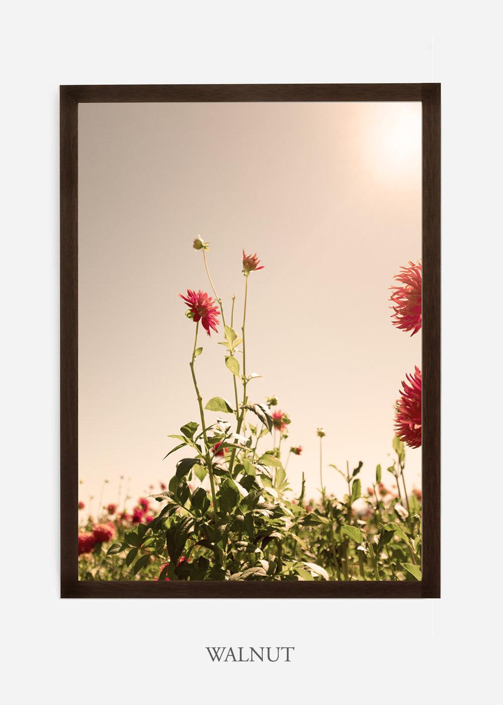 DahliaNo.2_walnutframe__NoMat_interiordesign_botanicalprint_art.jpg