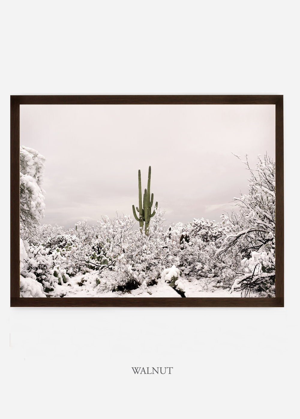 nomat_walnutframe-saguaroNo.1-wildercalifornia-art-wallart-cactusprint-homedecor-prints-arizona-botanical-artwork-interiordesign.jpg