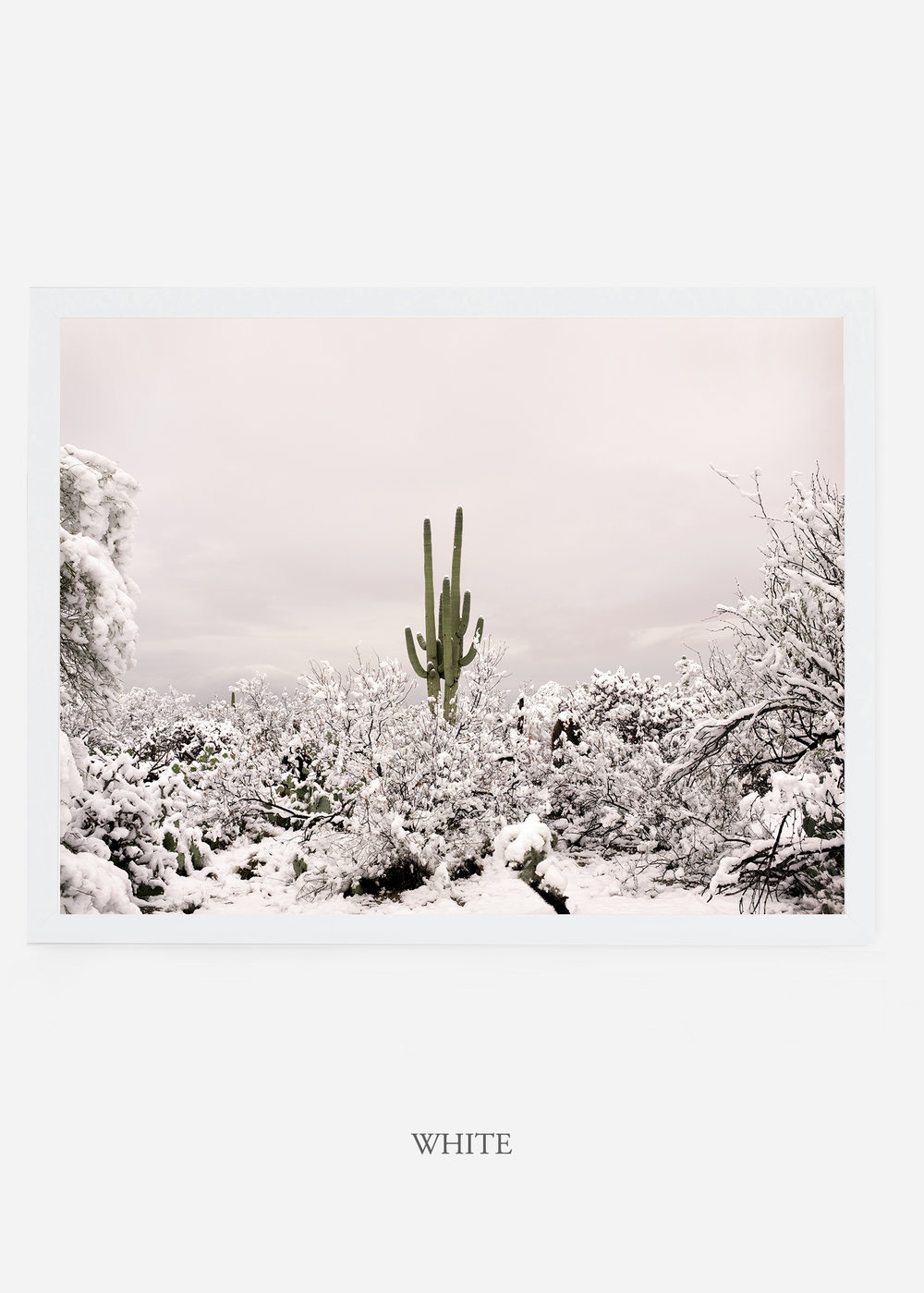 nomat_whiteframe-saguaroNo.1-wildercalifornia-art-wallart-cactusprint-homedecor-prints-arizona-botanical-artwork-interiordesign.jpg