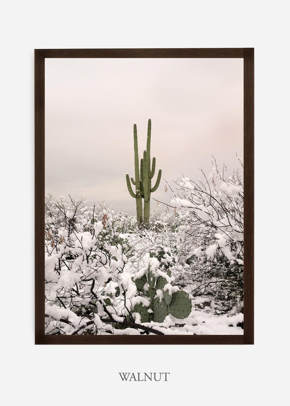 nomat-walnutframe-saguaroNo.2-wildercalifornia-art-wallart-cactusprint-homedecor-prints-arizona-botanical-artwork-interiordesign.jpg