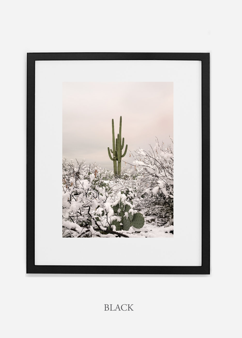 blackframe-saguaroNo.2-wildercalifornia-art-wallart-cactusprint-homedecor-prints-arizona-botanical-artwork-interiordesign.jpg