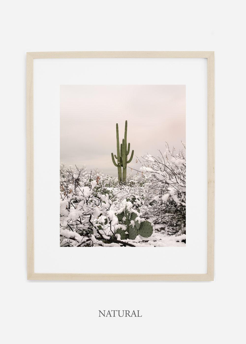 naturalframe-saguaroNo.2-wildercalifornia-art-wallart-cactusprint-homedecor-prints-arizona-botanical-artwork-interiordesign.jpg