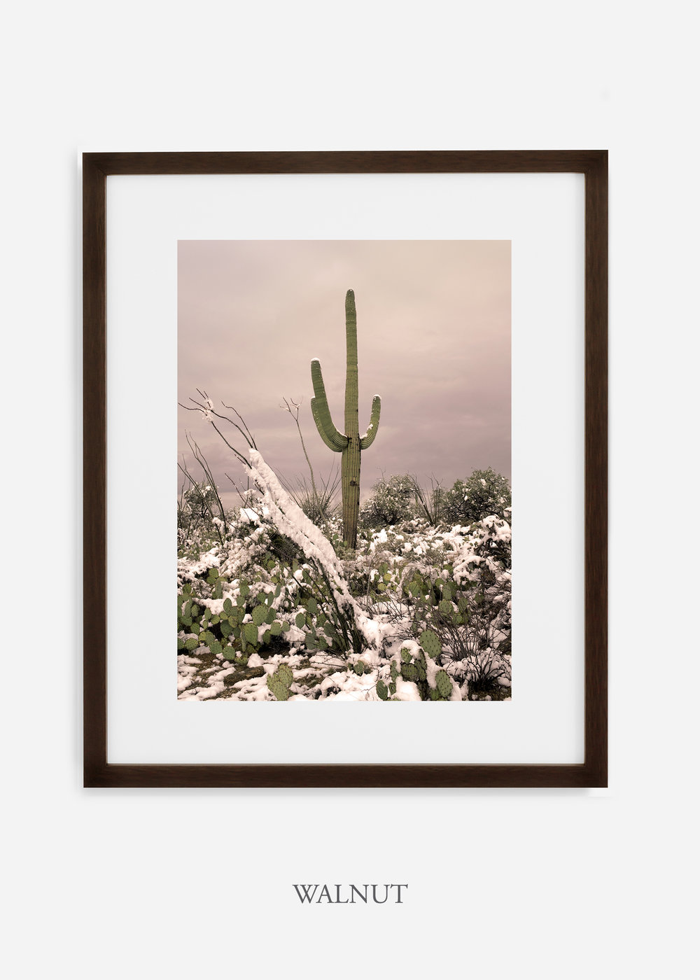 walnutframe-saguaroNo.4-wildercalifornia-art-wallart-cactusprint-homedecor-prints-arizona-botanical-artwork-interiordesign.jpg