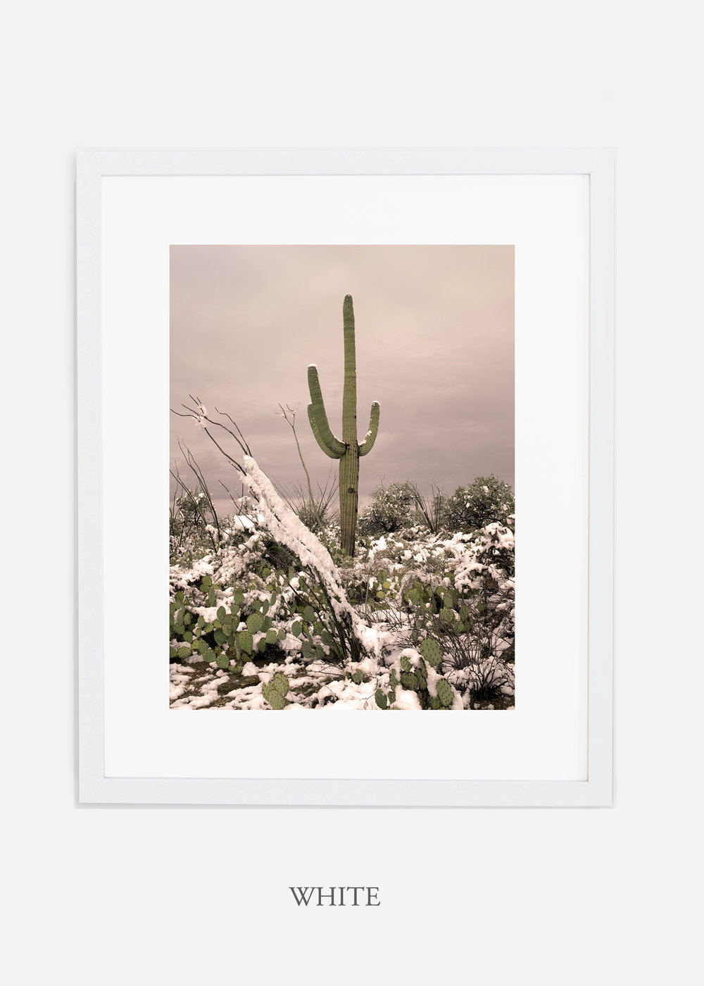 whiteframe-saguaroNo.4-wildercalifornia-art-wallart-cactusprint-homedecor-prints-arizona-botanical-artwork-interiordesign.jpg