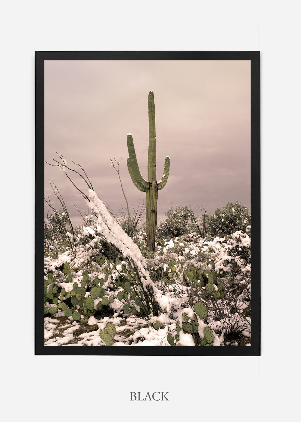 nomat-blackframe-saguaroNo.4-wildercalifornia-art-wallart-cactusprint-homedecor-prints-arizona-botanical-artwork-interiordesign.jpg