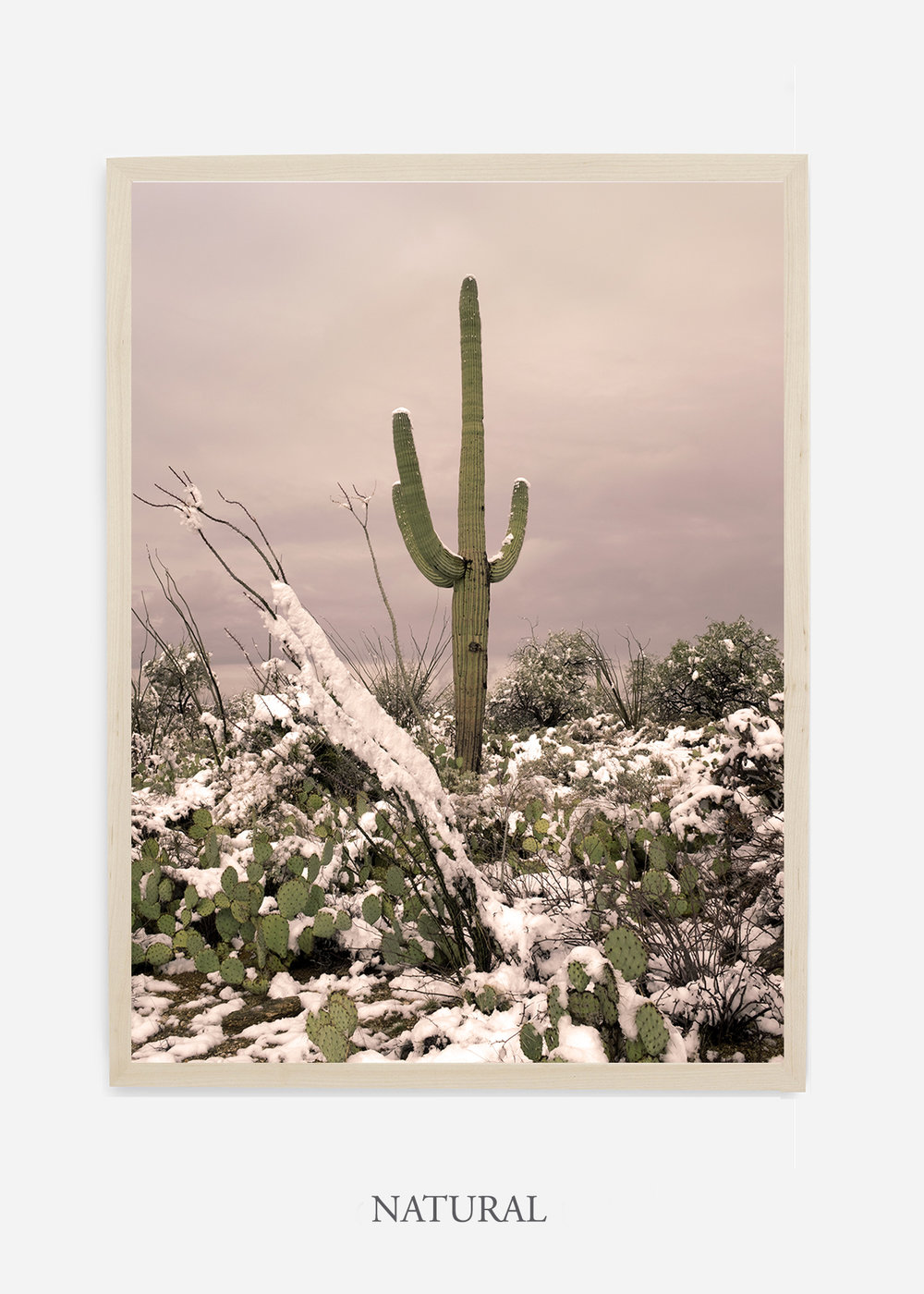 nomat-naturalframe-saguaroNo.4-wildercalifornia-art-wallart-cactusprint-homedecor-prints-arizona-botanical-artwork-interiordesign.jpg