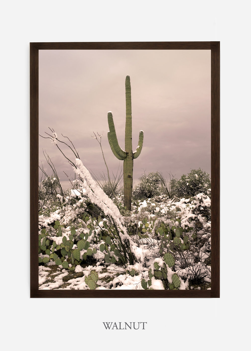 nomat-walnutframe-saguaroNo.4-wildercalifornia-art-wallart-cactusprint-homedecor-prints-arizona-botanical-artwork-interiordesign.jpg