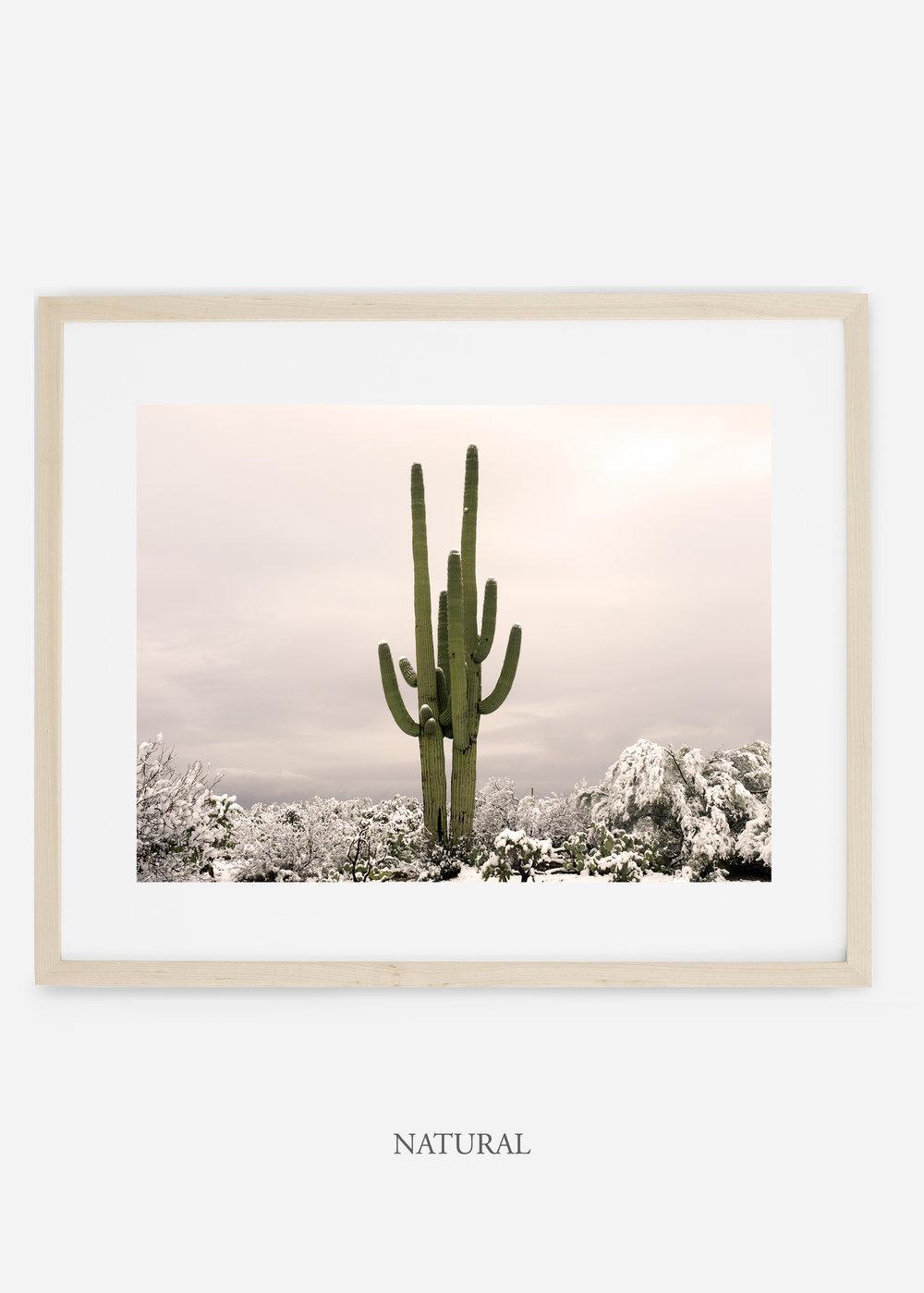 naturalframe-saguaroNo.5-wildercalifornia-art-wallart-cactusprint-homedecor-prints-arizona-botanical-artwork-interiordesign.jpg