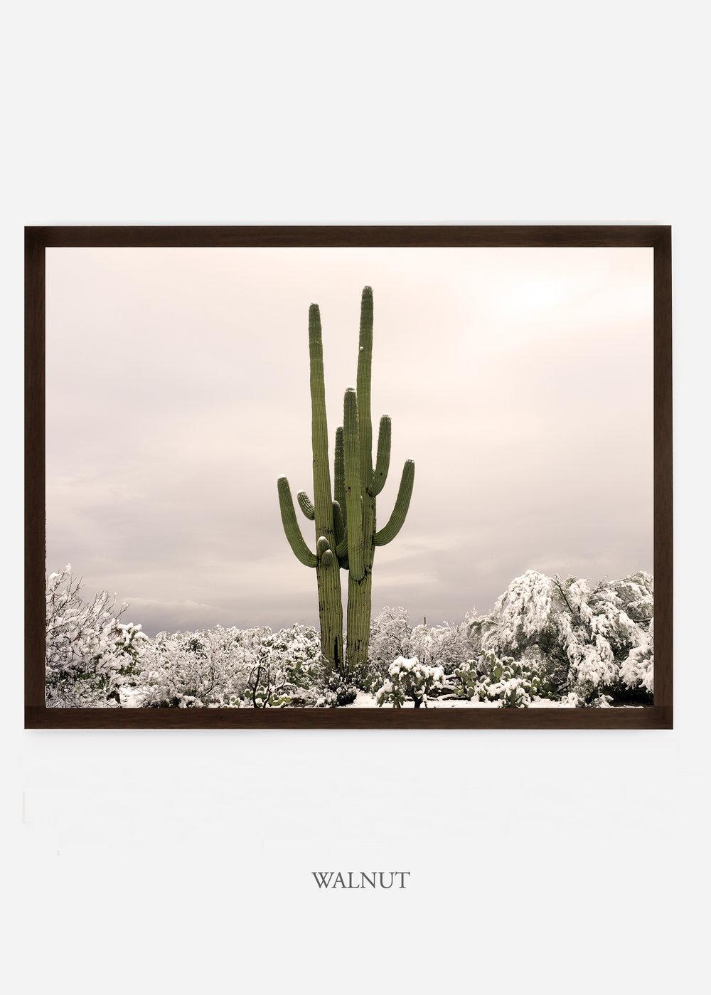 nomat_walnutframe-saguaroNo.5-wildercalifornia-art-wallart-cactusprint-homedecor-prints-arizona-botanical-artwork-interiordesign.jpg