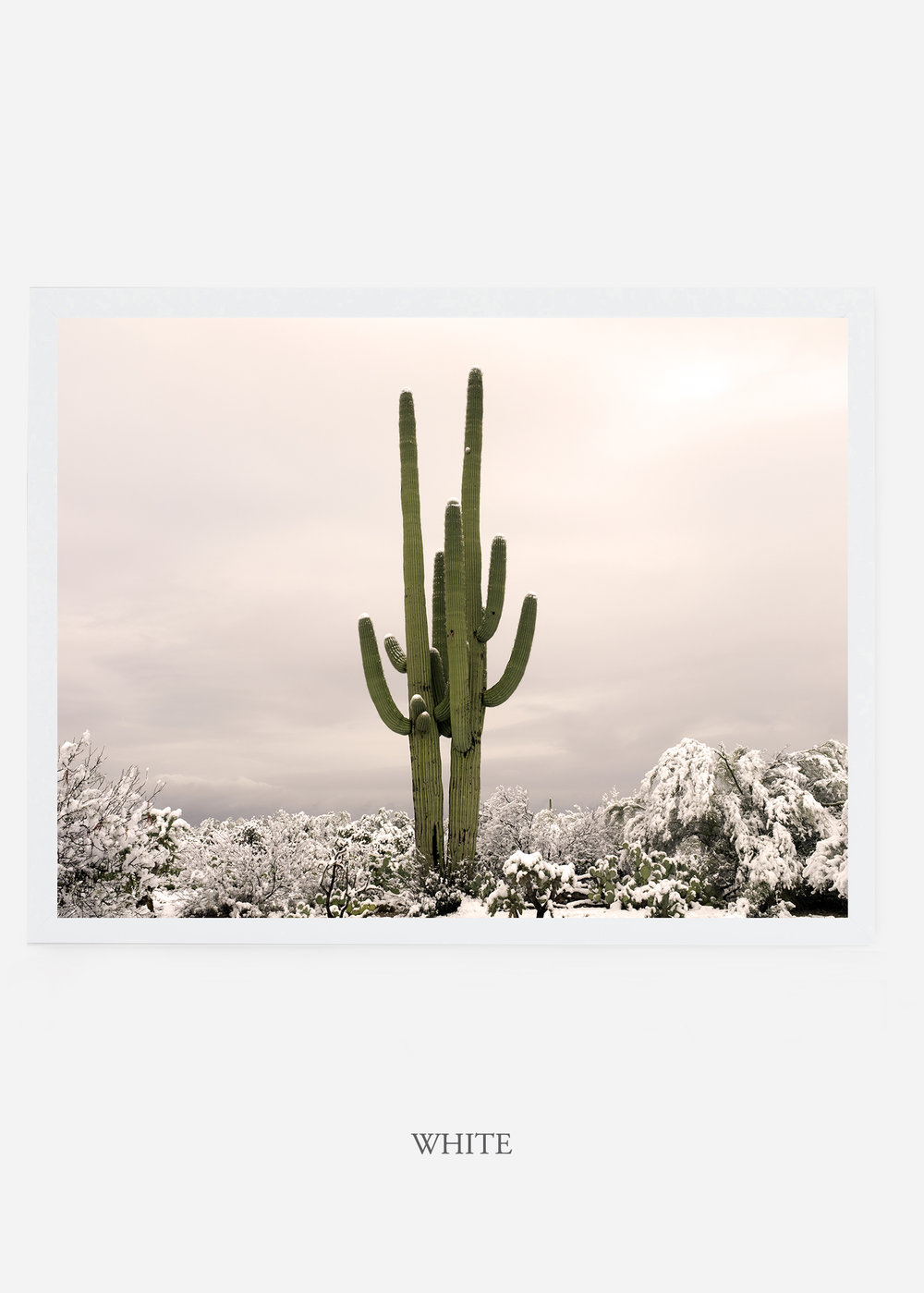 nomat_whiteframe-saguaroNo.5-wildercalifornia-art-wallart-cactusprint-homedecor-prints-arizona-botanical-artwork-interiordesign.jpg