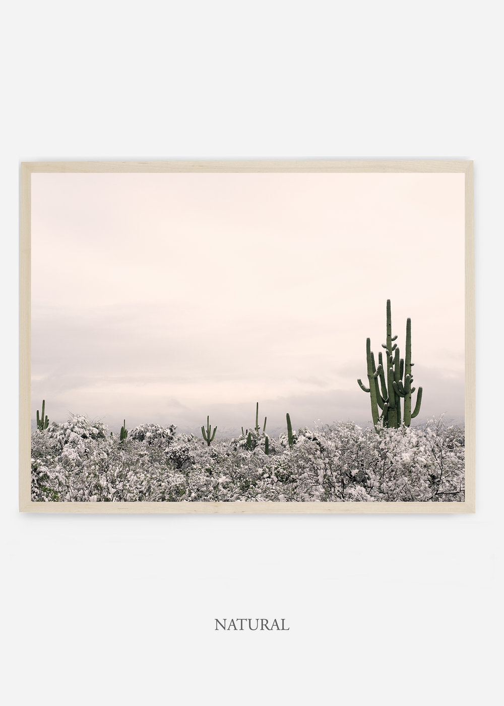 nomat_naturalframe-saguaroNo.7-wildercalifornia-art-wallart-cactusprint-homedecor-prints-arizona-botanical-artwork-interiordesign.jpg