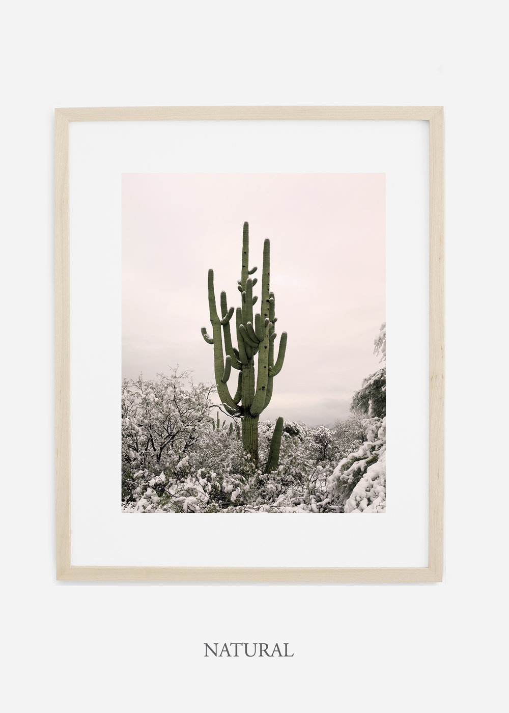 naturalframe-saguaroNo.8-wildercalifornia-art-wallart-cactusprint-homedecor-prints-arizona-botanical-artwork-interiordesign.jpg