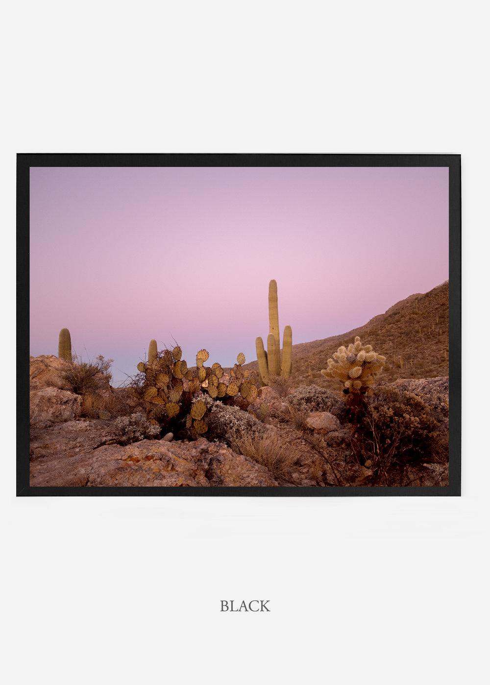 nomat_blackframe-saguaroNo.9-wildercalifornia-art-wallart-cactusprint-homedecor-prints-arizona-botanical-artwork-interiordesign.jpg