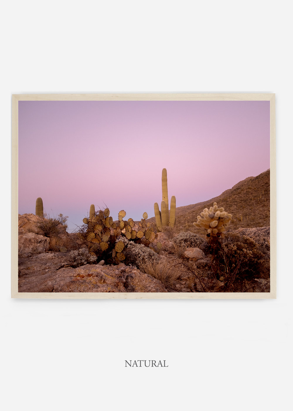 nomat_naturalframe-saguaroNo.9-wildercalifornia-art-wallart-cactusprint-homedecor-prints-arizona-botanical-artwork-interiordesign.jpg