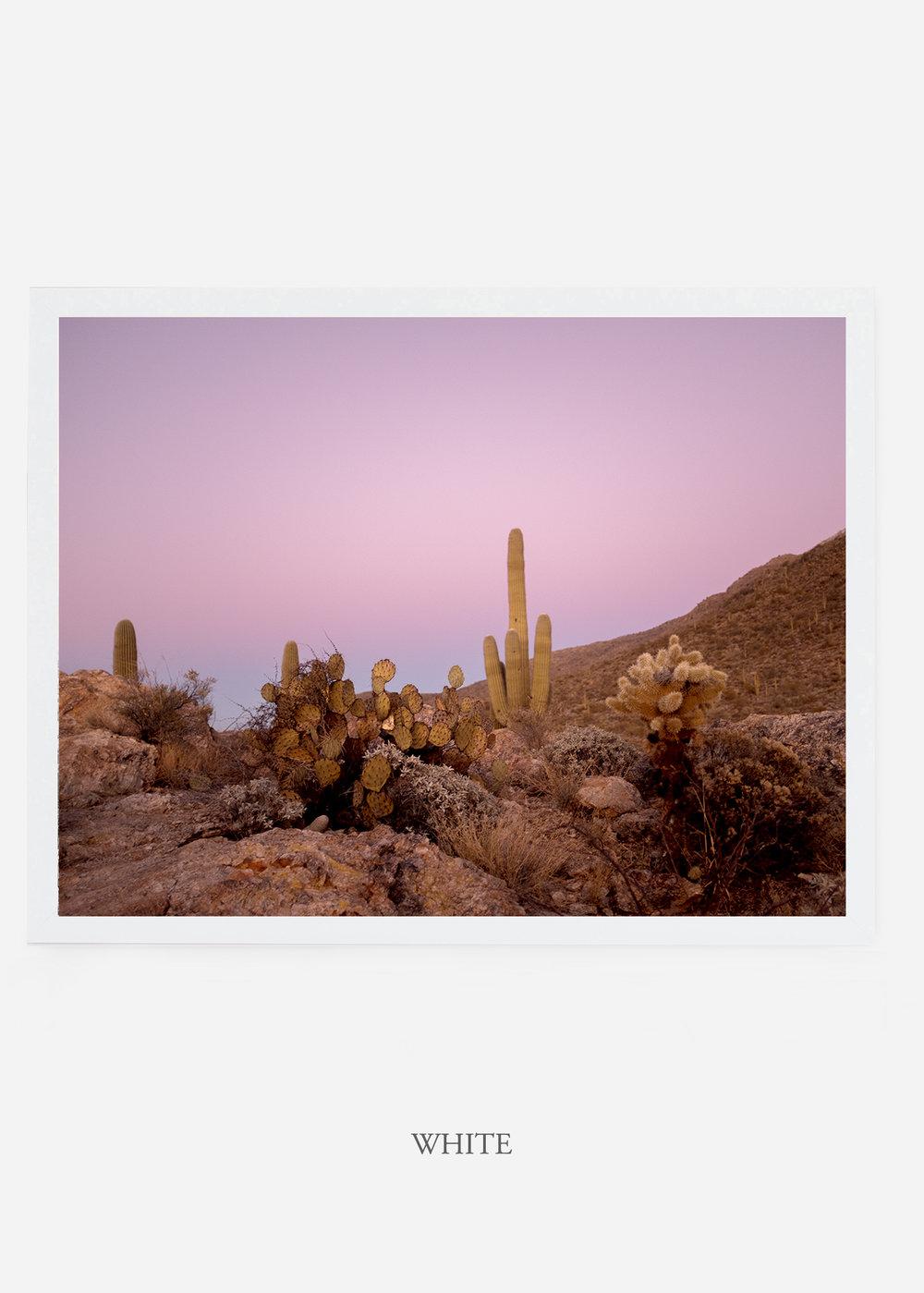 nomat_whiteframe-saguaroNo.9-wildercalifornia-art-wallart-cactusprint-homedecor-prints-arizona-botanical-artwork-interiordesign.jpg