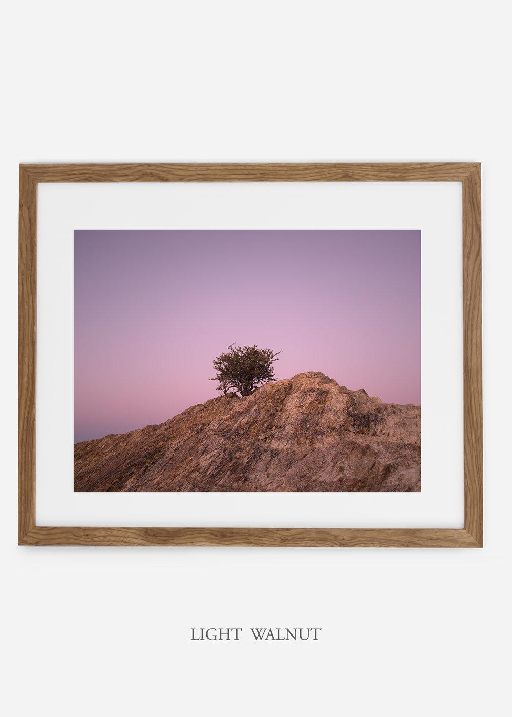 lightwalnutframe-saguaroNo.11-wildercalifornia-art-wallart-cactusprint-homedecor-prints-arizona-botanical-artwork-interiordesign.jpg