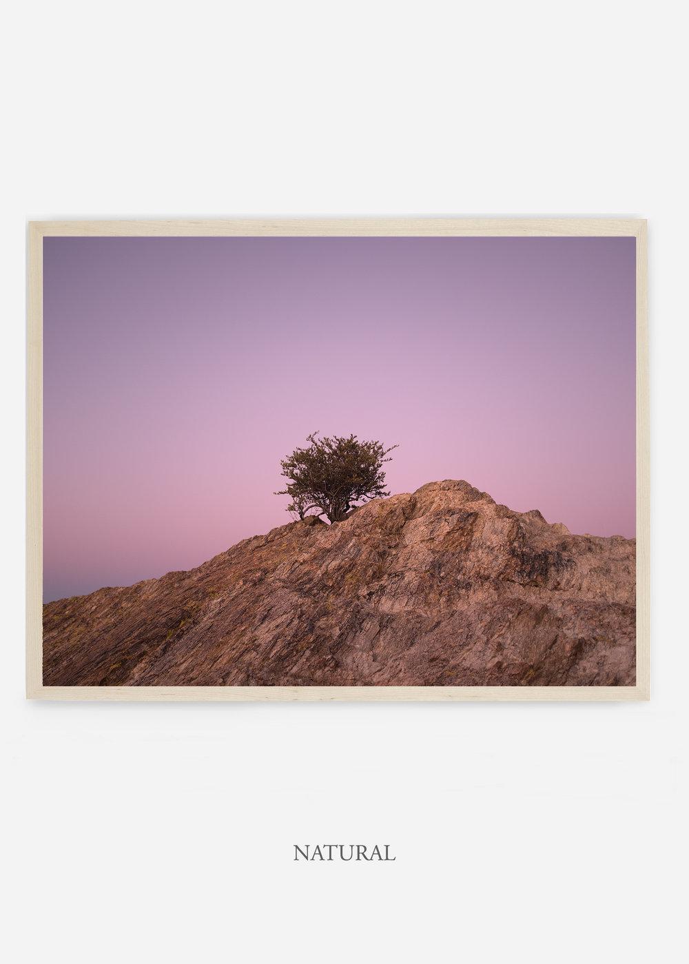 nomat_naturalframe-saguaroNo.11-wildercalifornia-art-wallart-cactusprint-homedecor-prints-arizona-botanical-artwork-interiordesign.jpg