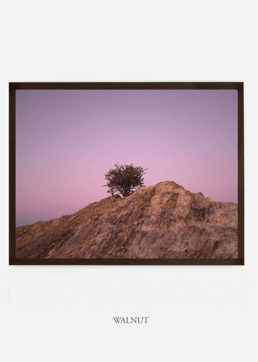 nomat_walnutframe-saguaroNo.11-wildercalifornia-art-wallart-cactusprint-homedecor-prints-arizona-botanical-artwork-interiordesign.jpg