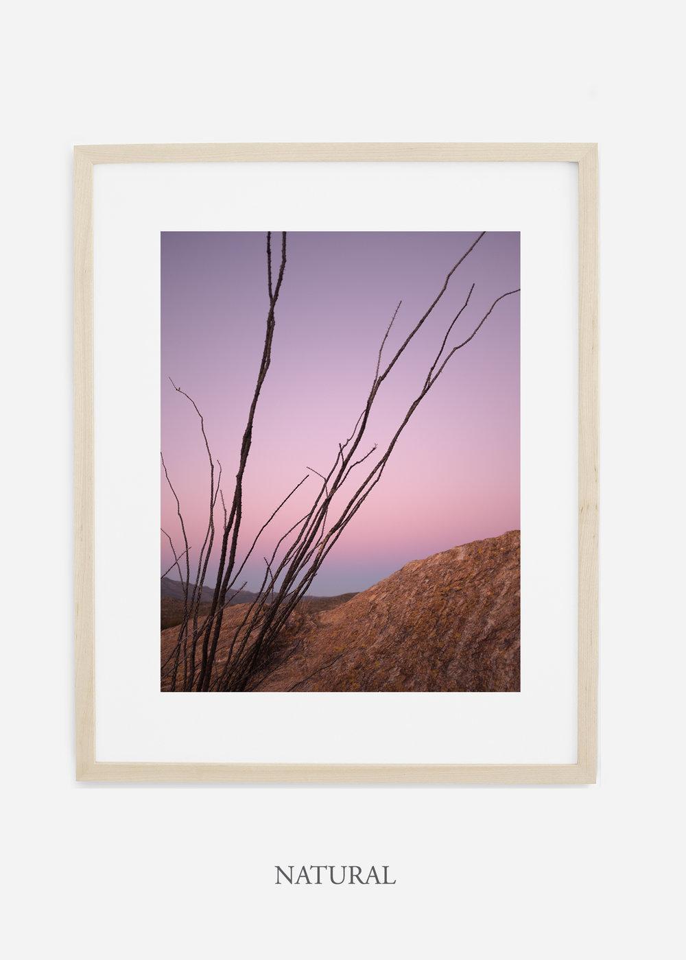 naturalframe-saguaroNo.12-wildercalifornia-art-wallart-cactusprint-homedecor-prints-arizona-botanical-artwork-interiordesign.jpg