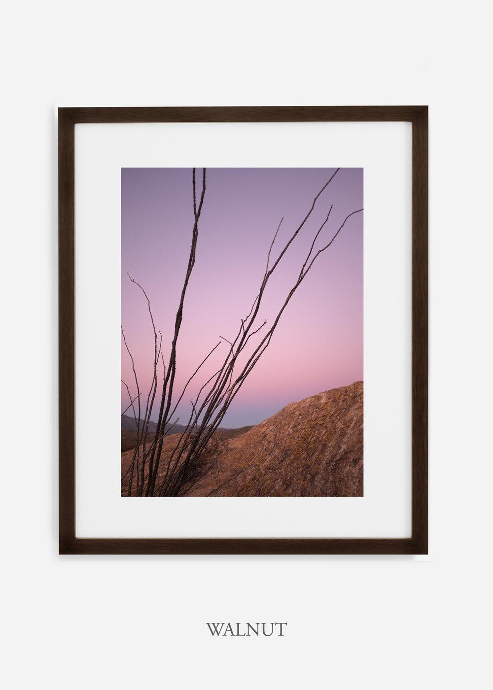 walnutframe-saguaroNo.12-wildercalifornia-art-wallart-cactusprint-homedecor-prints-arizona-botanical-artwork-interiordesign.jpg