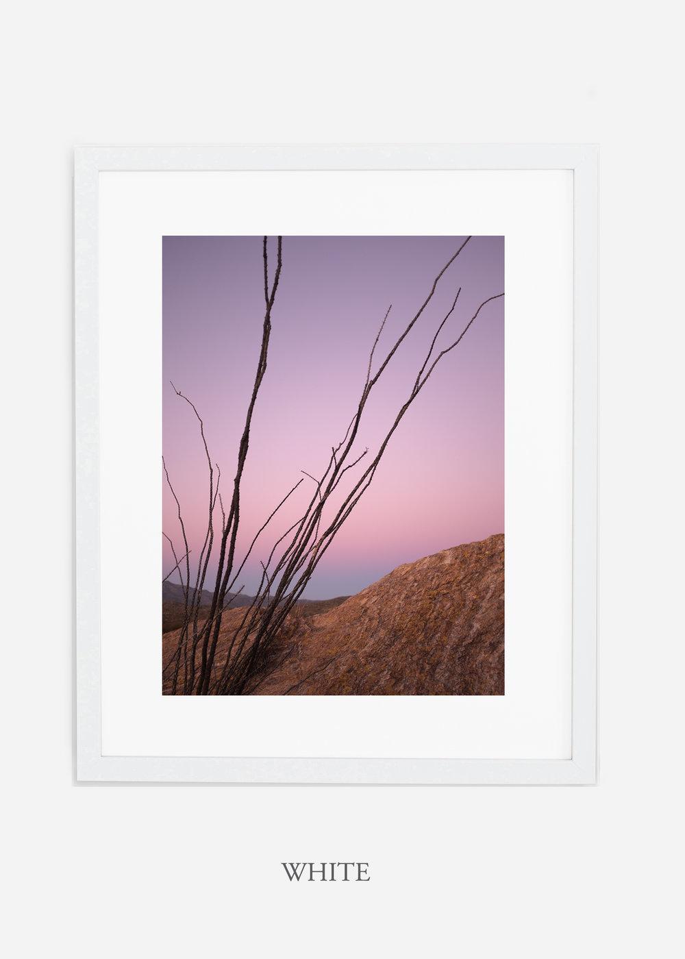 whiteframe-saguaroNo.12-wildercalifornia-art-wallart-cactusprint-homedecor-prints-arizona-botanical-artwork-interiordesign.jpg